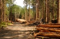 logging road Second-Growth-on-POW